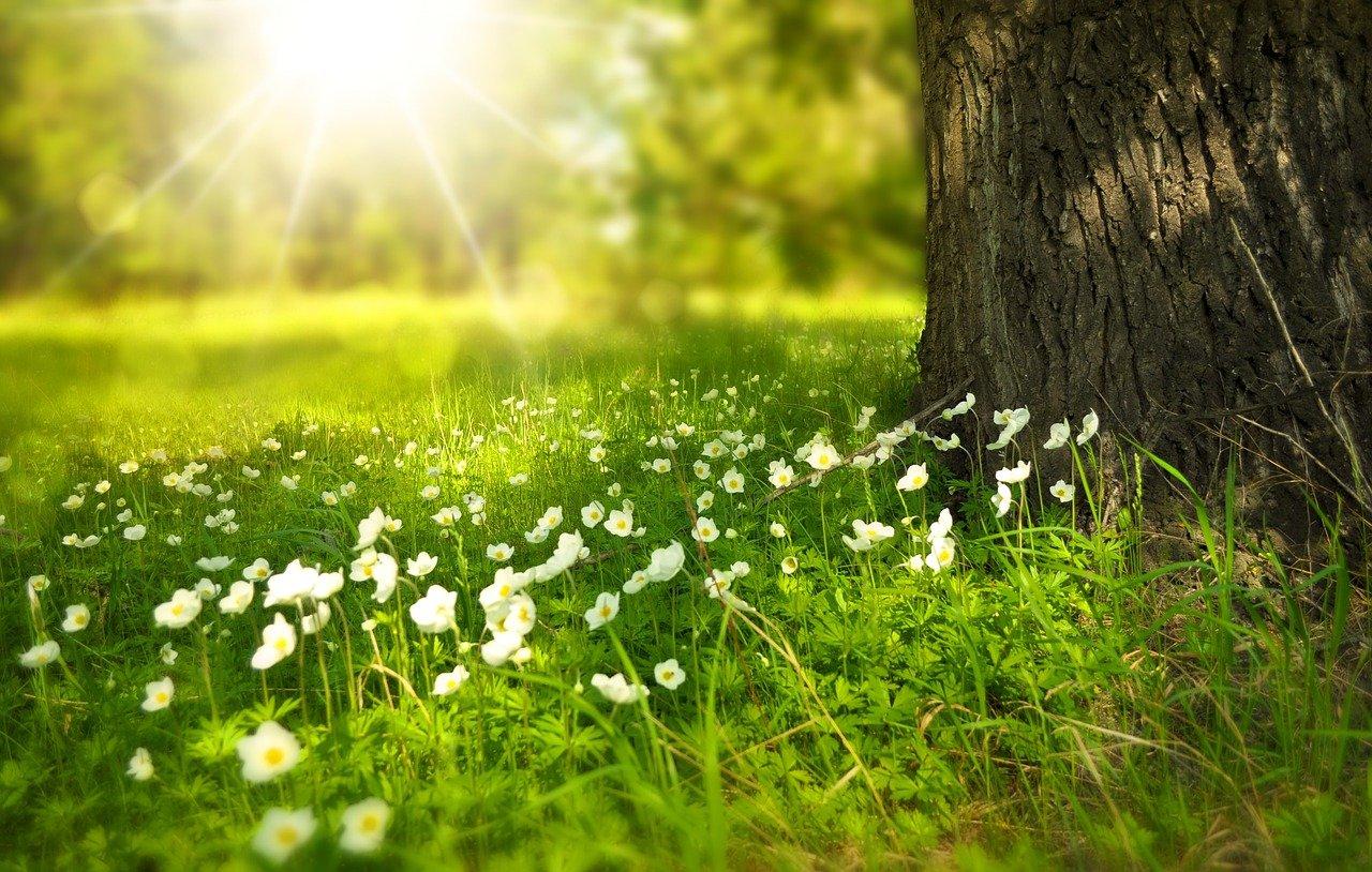 tree, flowers, meadow
